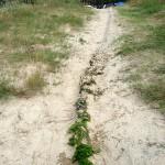 Landart, der grüne Fluss, Franziska Fiedler